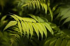 Natuurlijke schoonheid in groene tonen royalty-vrije stock fotografie