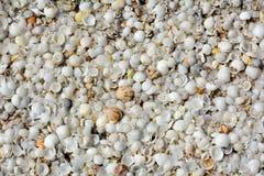 Natuurlijke shell achtergrond Royalty-vrije Stock Foto