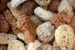 Natuurlijke sponsen in doos Stock Foto's