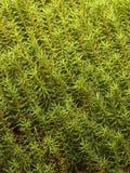 Natuurlijke textuur Stock Fotografie