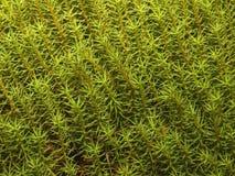 Natuurlijke textuur 2 Royalty-vrije Stock Foto's