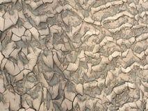 Natuurlijke Textuur Stock Foto's