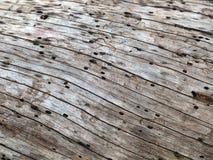 Natuurlijke textuur van boomboomstam, buitenoppervlak van dode pijnboom Stock Foto