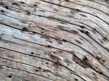 Natuurlijke textuur van boomboomstam, buitenoppervlak van dode pijnboom Stock Foto's