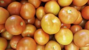 Natuurlijke tomaten tomates naturales Stock Afbeeldingen