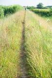 Natuurlijke Toscaanse weg Stock Foto's