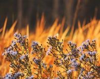 Natuurlijke trillende achtergrond met geschilderde damevlinder Royalty-vrije Stock Afbeeldingen