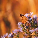 Natuurlijke trillende achtergrond met geschilderde damevlinder Royalty-vrije Stock Foto
