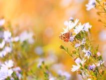 Natuurlijke trillende achtergrond met geschilderde damevlinder Stock Foto