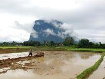 Natuurlijke tropische bossen Royalty-vrije Stock Foto's