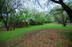Natuurlijke tuin Royalty-vrije Stock Afbeeldingen
