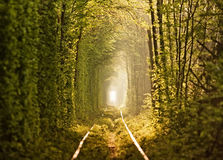 Natuurlijke tunnel van liefde die door bomen wordt gevormd Stock Fotografie