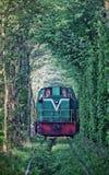 Natuurlijke tunnel van liefde die door bomen wordt gevormd Royalty-vrije Stock Fotografie