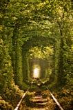 Natuurlijke tunnel van liefde die door bomen wordt gevormd Stock Foto
