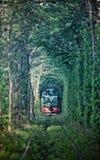Natuurlijke tunnel van liefde die door bomen wordt gevormd Royalty-vrije Stock Foto's