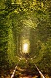Natuurlijke tunnel van liefde die door bomen wordt gevormd Royalty-vrije Stock Foto