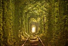 Natuurlijke tunnel van liefde die door bomen wordt gevormd Stock Afbeelding