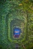 Natuurlijke tunnel van liefde die door bomen wordt gevormd Royalty-vrije Stock Afbeelding