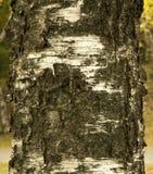 Natuurlijke van de achtergrond berkeschorstextuur document close-up Stock Foto's