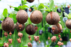 Natuurlijke varenbladeren in aard houten die zaad als blinde curta wordt verfraaid stock afbeelding
