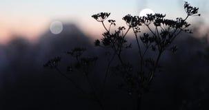 Natuurlijke vegetatie en mist in de avond stock video