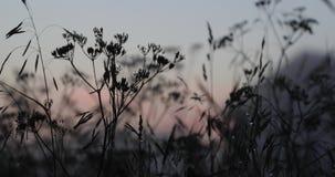 Natuurlijke vegetatie na regen in de avond stock videobeelden