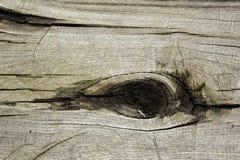 Natuurlijke vorming gelijkend op het menselijke oog in de boomstam royalty-vrije stock foto