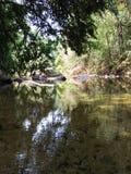 Natuurlijke waterpool in bos stock afbeeldingen