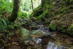 Natuurlijke waterstroom in het bos stock afbeelding