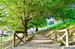 Natuurlijke Weg in het park stock foto's