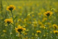 Natuurlijke Weide Stock Foto's