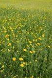 Natuurlijke Weide Stock Afbeelding