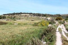 Natuurlijke Weide en Weg, Aardscène Stock Afbeeldingen