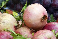 Natuurlijke Witte Granaatappels bij een Landbouwersmarkt Stock Afbeeldingen
