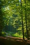 Natuurlijke zonbescherming Stock Fotografie