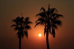 Natuurlijke zonnige mening Stock Foto