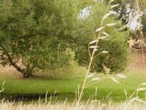 Natuurreservaat stock foto