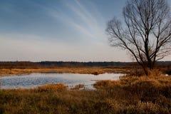 Natuurreservaat met een natuurlijke vijver en in de voorgrond een detai Stock Afbeelding