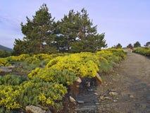 Natuurreservaat Peñalara, Madrid, Spanje royalty-vrije stock foto