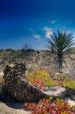 Natuurreservaat van Guardamar del Segura Royalty-vrije Stock Afbeeldingen