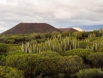 Natuurreservaat van Malpais DE Rasca Stock Foto