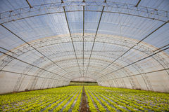 Natuurvoeding royalty-vrije stock fotografie