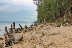 Naufrágio das árvores jogadas na costa do lago Turgoyak no Chelyabinsk imagem de stock
