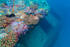Naufrage dans le bleu d'océan, Maldives photos libres de droits