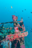 Naufrage dans le bleu d'océan, Maldives photo stock