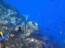 Naufrage USS Liberty - Bali Indonésie Asie images stock