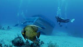 Naufragio e pesci fotografia stock libera da diritti