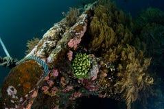 Naufragio subacuático fotografía de archivo