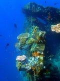 Naufragio USS Liberty - Bali Indonesia Asia fotografia stock