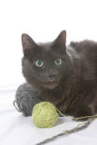 Naughty black cat with balls of yarn Royalty Free Stock Photo